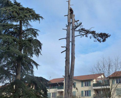 Paysagiste espaces verts beaujolais Lyon
